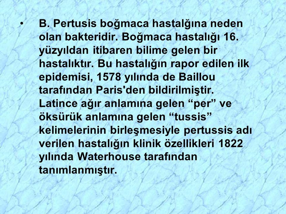 B. Pertusis boğmaca hastalğına neden olan bakteridir. Boğmaca hastalığı 16. yüzyıldan itibaren bilime gelen bir hastalıktır. Bu hastalığın rapor edile