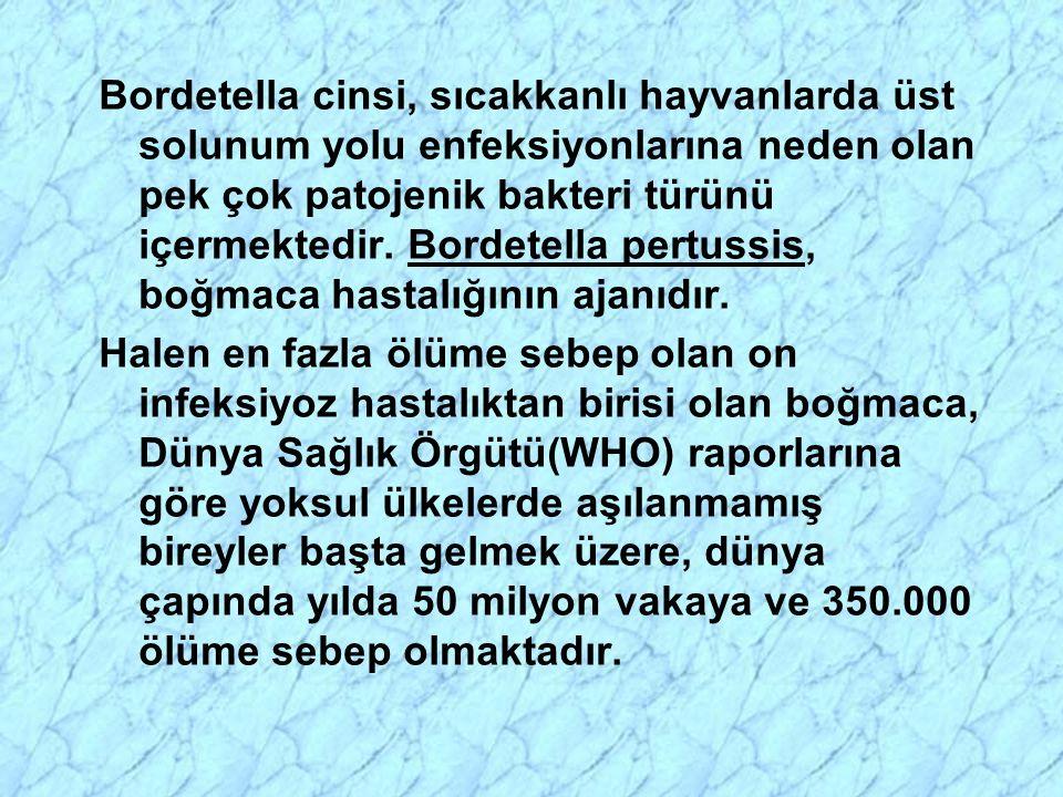 Bordetella cinsi, sıcakkanlı hayvanlarda üst solunum yolu enfeksiyonlarına neden olan pek çok patojenik bakteri türünü içermektedir.