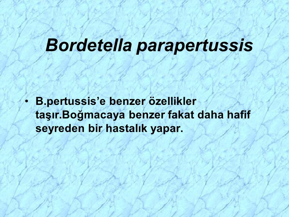 Bordetella parapertussis B.pertussis'e benzer özellikler taşır.Boğmacaya benzer fakat daha hafif seyreden bir hastalık yapar.