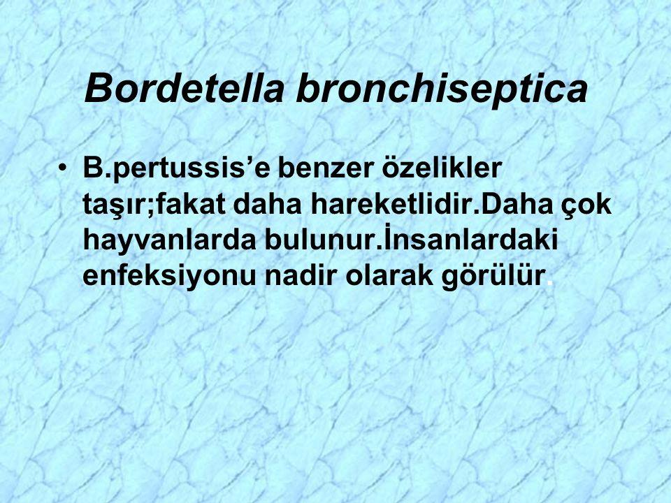 Bordetella bronchiseptica B.pertussis'e benzer özelikler taşır;fakat daha hareketlidir.Daha çok hayvanlarda bulunur.İnsanlardaki enfeksiyonu nadir ola