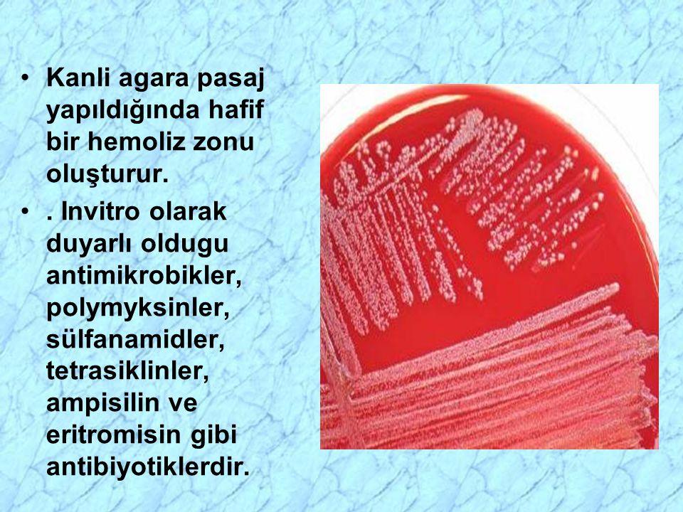 Kanli agara pasaj yapıldığında hafif bir hemoliz zonu oluşturur.. Invitro olarak duyarlı oldugu antimikrobikler, polymyksinler, sülfanamidler, tetrasi