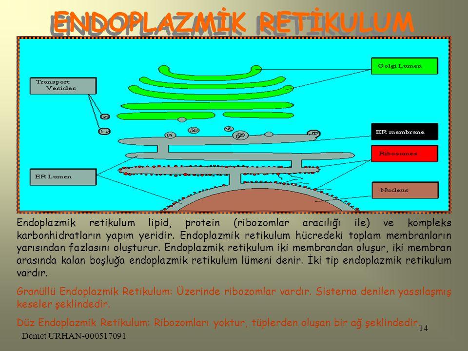 Demet URHAN-000517091 13 MİTOKONDRİ Mitokondri, hücre için gerekli olan enerjinin üretildiği bir organeldir.Bu organelde tıpkı diğer organeller gibi b