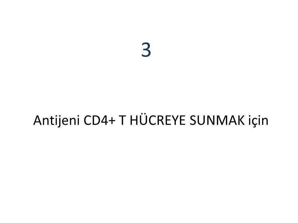 Antijeni CD4+ T HÜCREYE SUNMAK için 3
