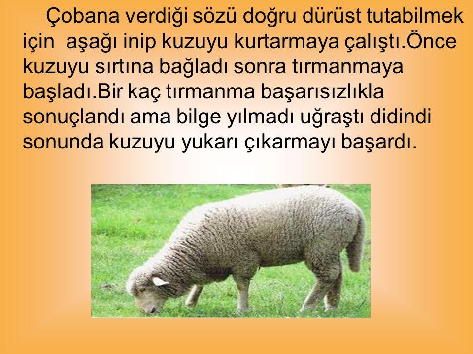 Sorumluluğunu yerine getirmenin mutluluğuyla çobana sürüsünü teslim etti.