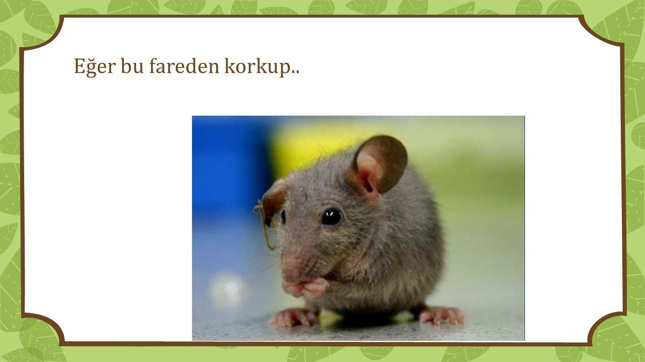 Eğer bu fareden korkup..