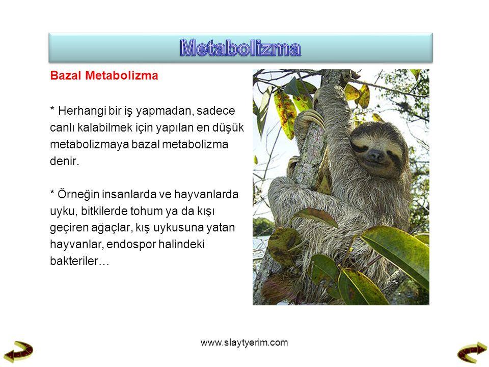 Bazal Metabolizma * Herhangi bir iş yapmadan, sadece canlı kalabilmek için yapılan en düşük metabolizmaya bazal metabolizma denir.