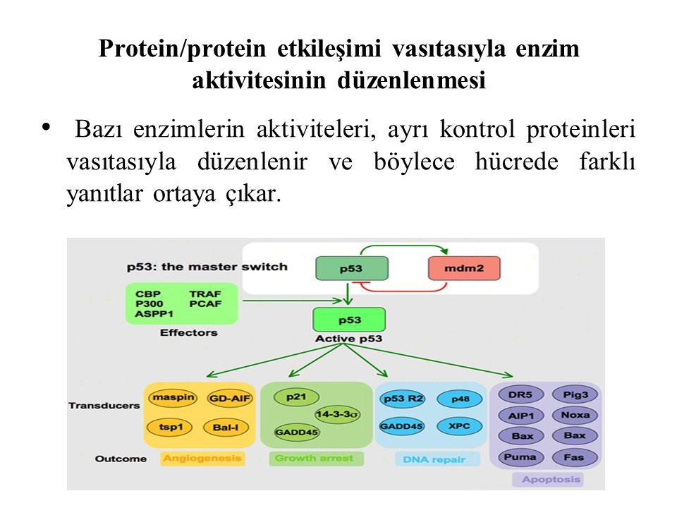 Protein/protein etkileşimi vasıtasıyla enzim aktivitesinin düzenlenmesi Bazı enzimlerin aktiviteleri, ayrı kontrol proteinleri vasıtasıyla düzenlenir ve böylece hücrede farklı yanıtlar ortaya çıkar.