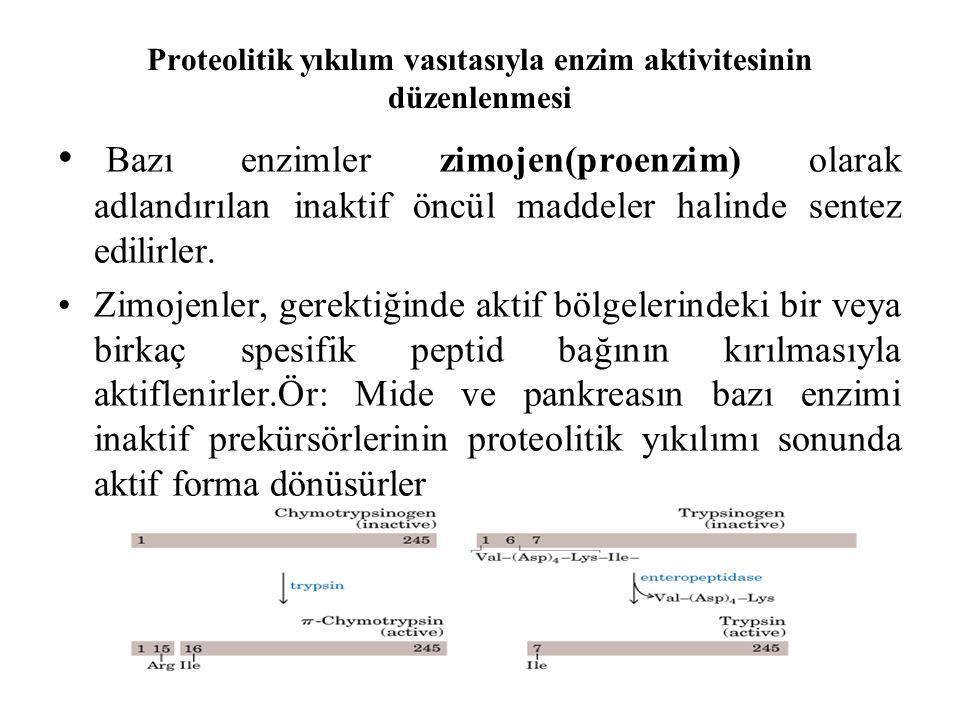 Proteolitik yıkılım vasıtasıyla enzim aktivitesinin düzenlenmesi Bazı enzimler zimojen(proenzim) olarak adlandırılan inaktif öncül maddeler halinde sentez edilirler.