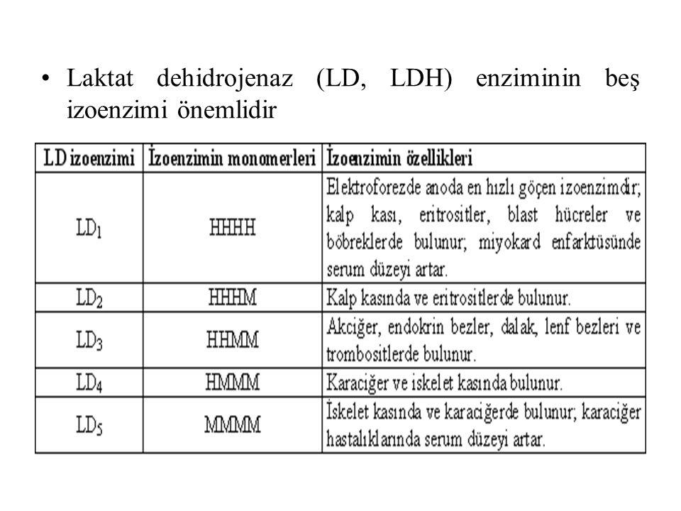 Laktat dehidrojenaz (LD, LDH) enziminin beş izoenzimi önemlidir