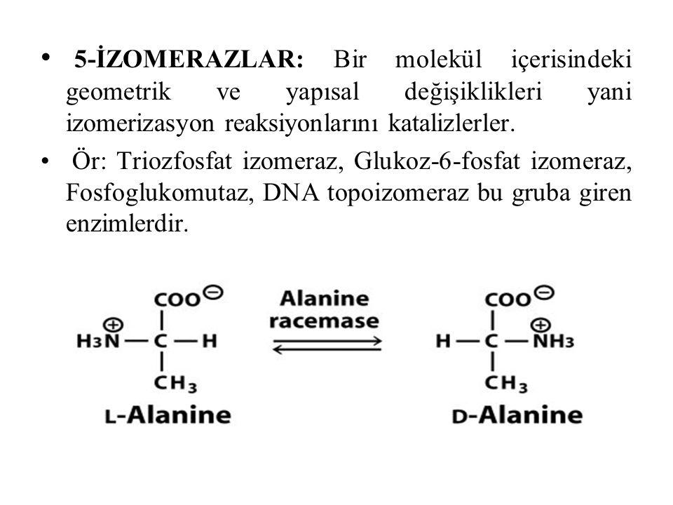 5-İZOMERAZLAR: Bir molekül içerisindeki geometrik ve yapısal değişiklikleri yani izomerizasyon reaksiyonlarını katalizlerler.