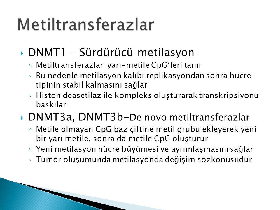  DNMT1 – Sürdürücü metilasyon ◦ Metiltransferazlar yarı-metile CpG'leri tanır ◦ Bu nedenle metilasyon kalıbı replikasyondan sonra hücre tipinin stabil kalmasını sağlar ◦ Histon deasetilaz ile kompleks oluşturarak transkripsiyonu baskılar  DNMT3a, DNMT3b- De novo metiltransferazlar ◦ Metile olmayan CpG baz çiftine metil grubu ekleyerek yeni bir yarı metile, sonra da metile CpG oluşturur ◦ Yeni metilasyon hücre büyümesi ve ayrımlaşmasını sağlar ◦ Tumor oluşumunda metilasyonda değişim sözkonusudur