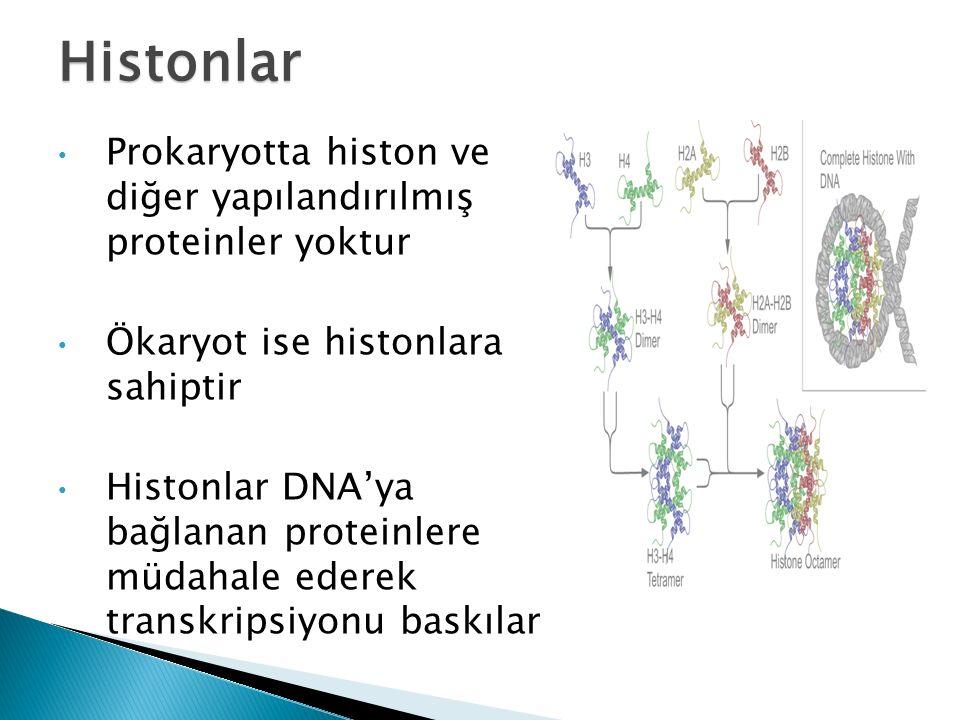 Prokaryotta histon ve diğer yapılandırılmış proteinler yoktur Ökaryot ise histonlara sahiptir Histonlar DNA'ya bağlanan proteinlere müdahale ederek transkripsiyonu baskılar Histonlar