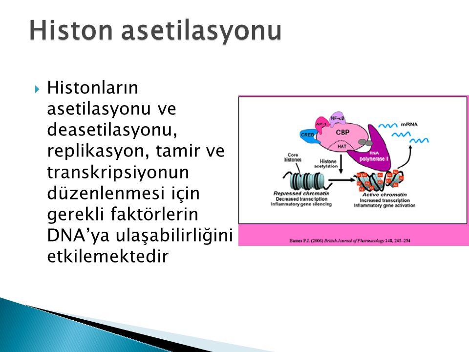  Histonların asetilasyonu ve deasetilasyonu, replikasyon, tamir ve transkripsiyonun düzenlenmesi için gerekli faktörlerin DNA'ya ulaşabilirliğini etkilemektedir Histon asetilasyonu