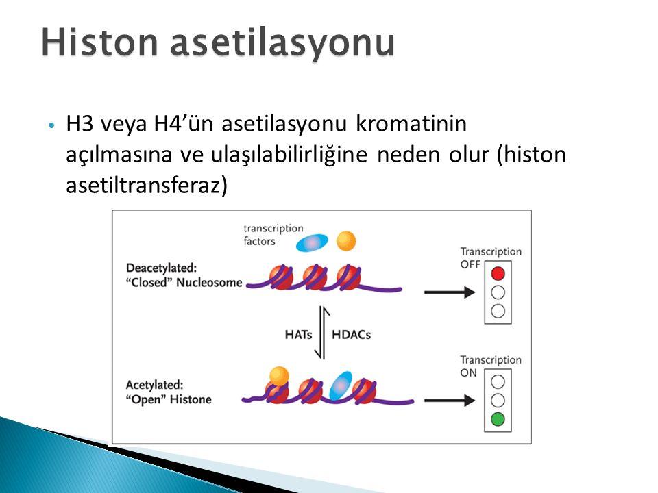 H3 veya H4'ün asetilasyonu kromatinin açılmasına ve ulaşılabilirliğine neden olur (histon asetiltransferaz)