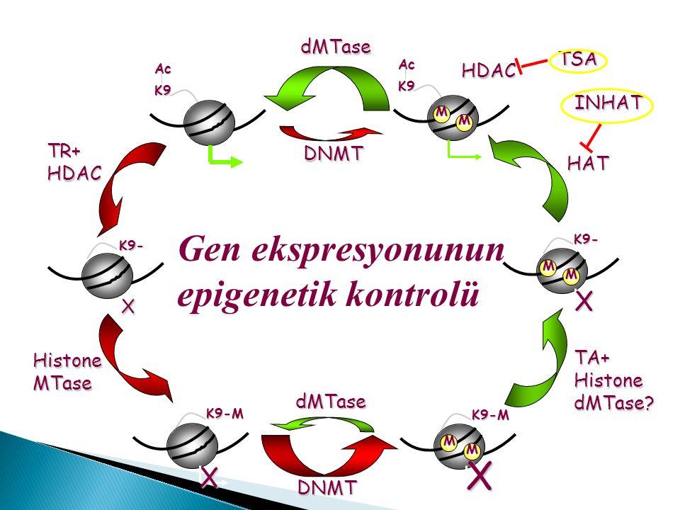 dMTase DNMT dMTase K9 Ac TR+ HDAC K9- X DNMT K9-M M M X HistoneMTase K9-M X HAT K9 Ac M M TA+HistonedMTase.