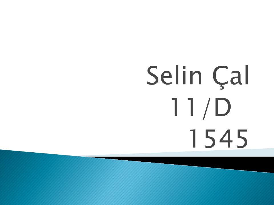 Selin Çal 11/D 1545