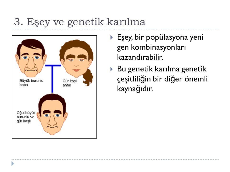 3. Eşey ve genetik karılma  Eşey, bir popülasyona yeni gen kombinasyonları kazandırabilir.  Bu genetik karılma genetik çeşitlili ğ in bir di ğ er ön
