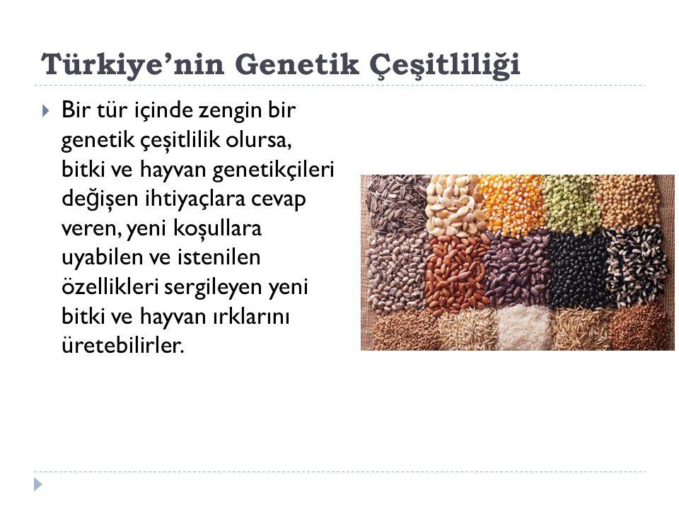 Türkiye'nin Genetik Çeşitliliği  Bir tür içinde zengin bir genetik çeşitlilik olursa, bitki ve hayvan genetikçileri de ğ işen ihtiyaçlara cevap veren