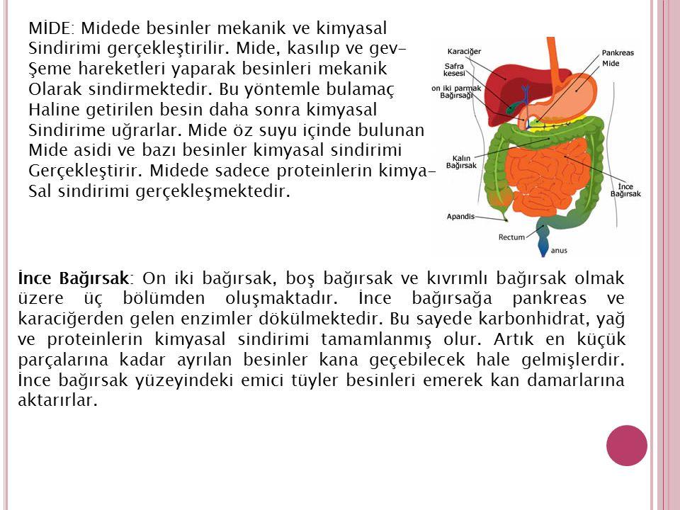 MİDE: Midede besinler mekanik ve kimyasal Sindirimi gerçekleştirilir. Mide, kasılıp ve gev- Şeme hareketleri yaparak besinleri mekanik Olarak sindirme