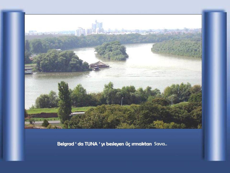Novi Sad 'da TUNA
