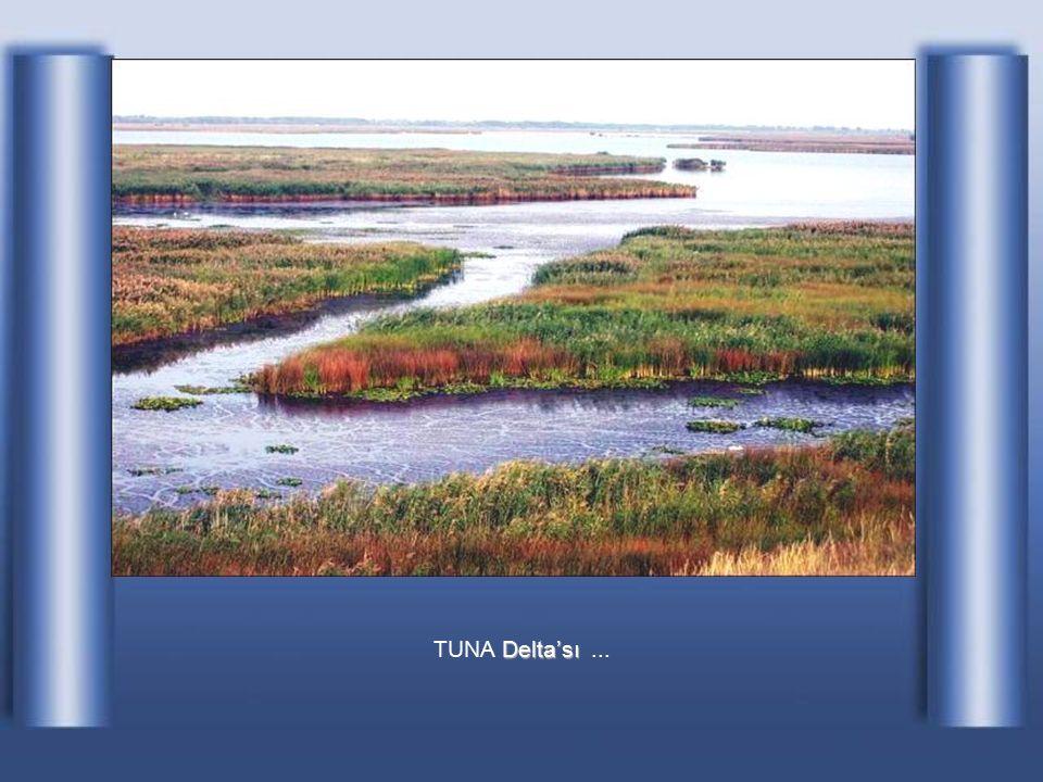 Floresta Letea'da tropikal delta olarak TUNA