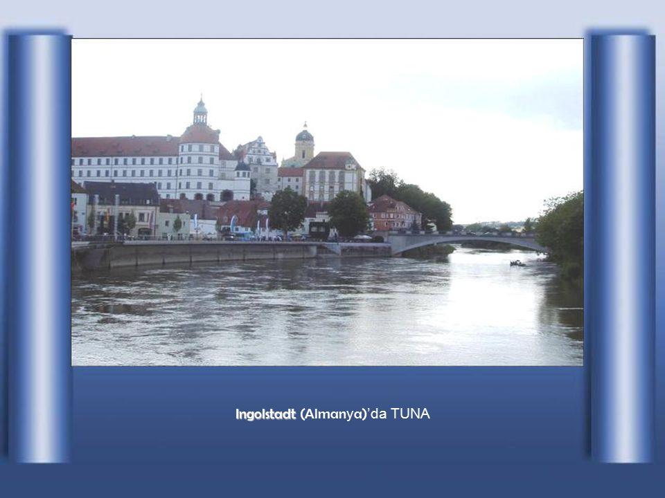 Ulm (Almanya)da TUNA