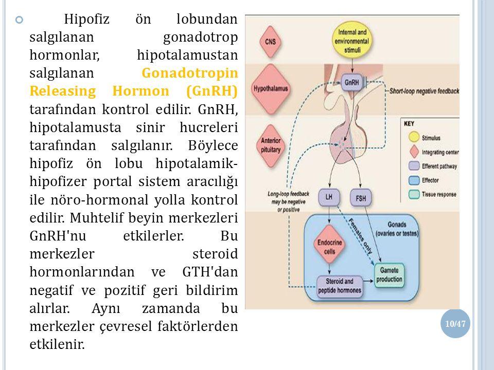 Hipofiz ön lobundan salgılanan gonadotrop hormonlar, hipotalamustan salgılanan Gonadotropin Releasing Hormon (GnRH) tarafından kontrol edilir.