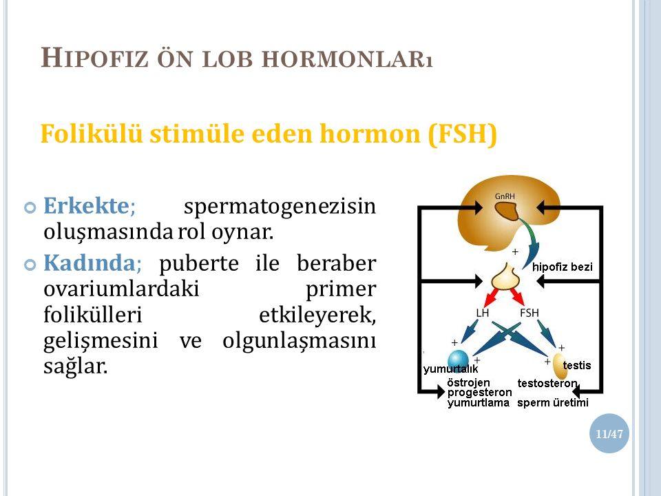 H IPOFIZ ÖN LOB HORMONLARı Folikülü stimüle eden hormon (FSH) Erkekte; spermatogenezisin oluşmasında rol oynar.