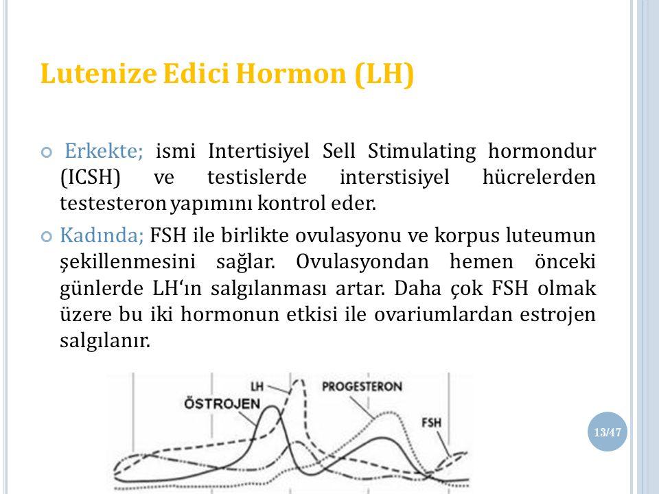 Lutenize Edici Hormon (LH) Erkekte; ismi Intertisiyel Sell Stimulating hormondur (ICSH) ve testislerde interstisiyel hücrelerden testesteron yapımını kontrol eder.