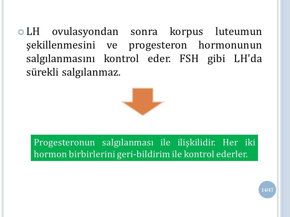 LH ovulasyondan sonra korpus luteumun şekillenmesini ve progesteron hormonunun salgılanmasını kontrol eder.