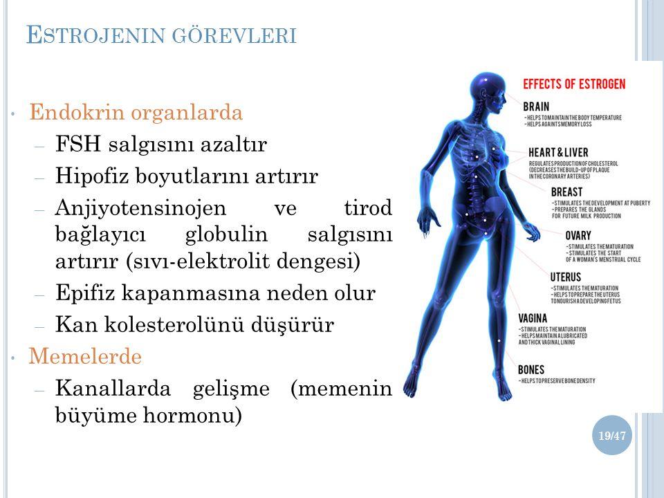 E STROJENIN GÖREVLERI Endokrin organlarda – FSH salgısını azaltır – Hipofiz boyutlarını artırır – Anjiyotensinojen ve tirod bağlayıcı globulin salgısını artırır (sıvı-elektrolit dengesi) – Epifiz kapanmasına neden olur – Kan kolesterolünü düşürür Memelerde – Kanallarda gelişme (memenin büyüme hormonu) 19/47