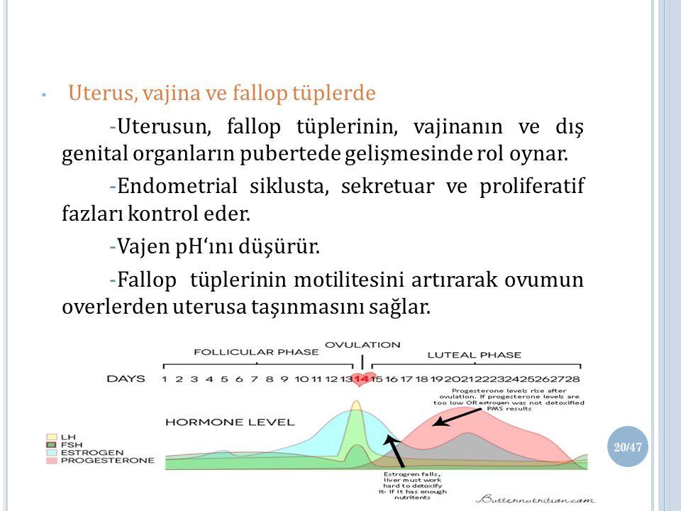 Uterus, vajina ve fallop tüplerde -Uterusun, fallop tüplerinin, vajinanın ve dış genital organların pubertede gelişmesinde rol oynar.