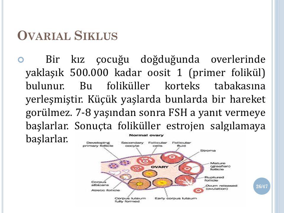 O VARIAL S IKLUS Bir kız çocuğu doğduğunda overlerinde yaklaşık 500.000 kadar oosit 1 (primer folikül) bulunur.