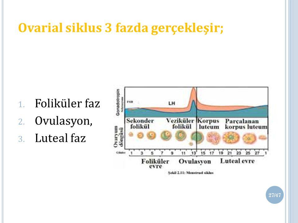 Ovarial siklus 3 fazda gerçekleşir; 1. Foliküler faz, 2. Ovulasyon, 3. Luteal faz 27/47