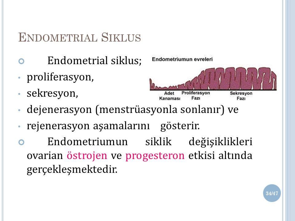 E NDOMETRIAL S IKLUS Endometrial siklus; proliferasyon, sekresyon, dejenerasyon (menstrüasyonla sonlanır) ve rejenerasyon aşamalarını gösterir.