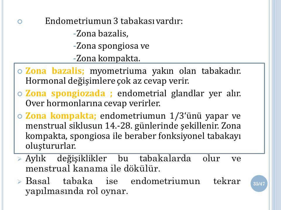 Endometriumun 3 tabakası vardır: -Zona bazalis, -Zona spongiosa ve -Zona kompakta.