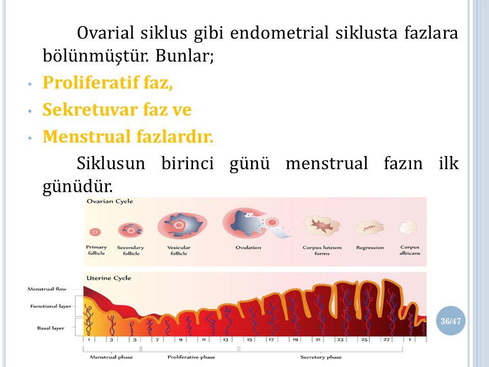 Ovarial siklus gibi endometrial siklusta fazlara bölünmüştür.
