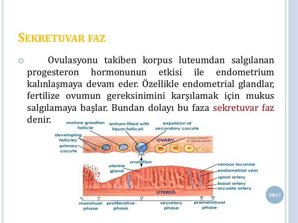 S EKRETUVAR FAZ Ovulasyonu takiben korpus luteumdan salgılanan progesteron hormonunun etkisi ile endometrium kalınlaşmaya devam eder.