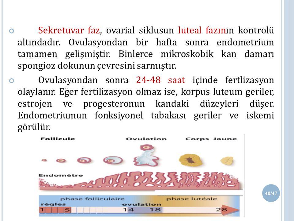 Sekretuvar faz, ovarial siklusun luteal fazının kontrolü altındadır.