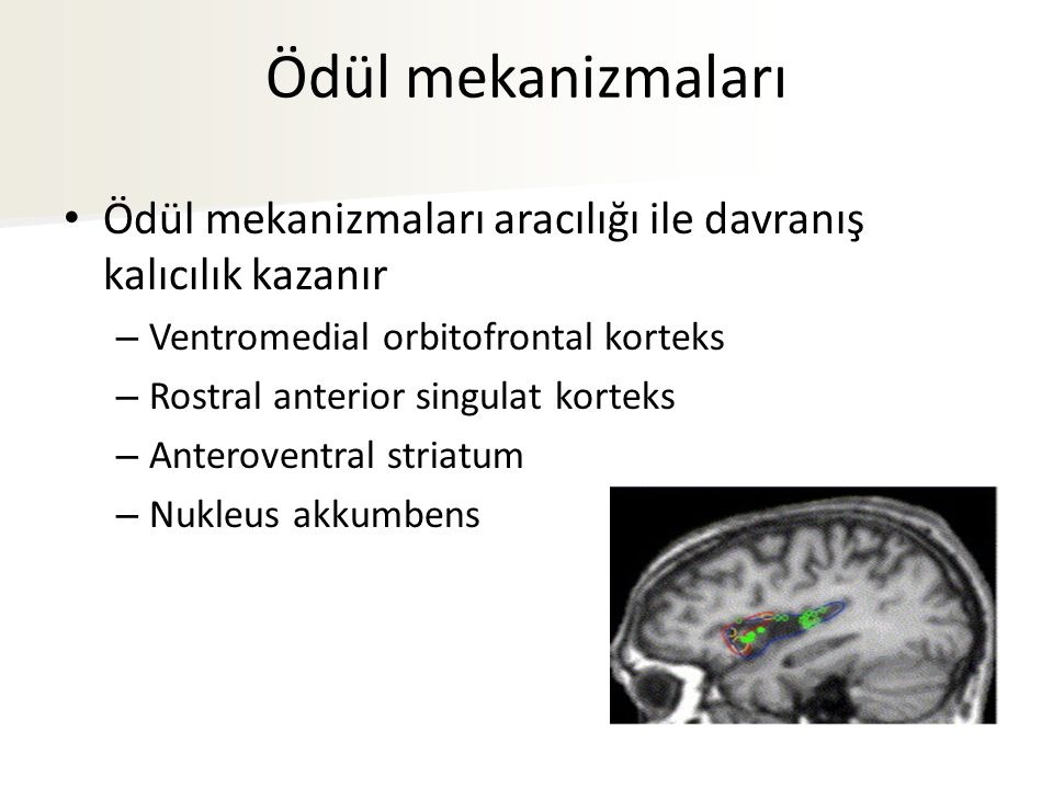 Ödül mekanizmaları Ödül mekanizmaları aracılığı ile davranış kalıcılık kazanır – Ventromedial orbitofrontal korteks – Rostral anterior singulat korteks – Anteroventral striatum – Nukleus akkumbens