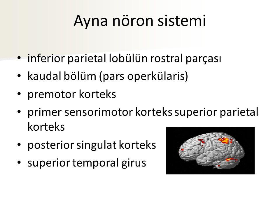 Ayna nöron sistemi inferior parietal lobülün rostral parçası kaudal bölüm (pars operkülaris) premotor korteks primer sensorimotor korteks superior parietal korteks posterior singulat korteks superior temporal girus