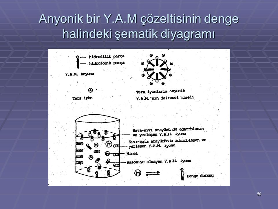 50 Anyonik bir Y.A.M çözeltisinin denge halindeki şematik diyagramı