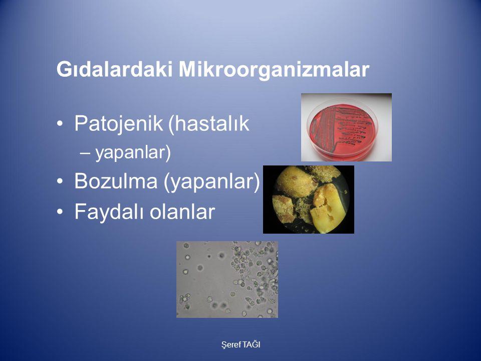 Gıdalardaki Mikroorganizmalar Patojenik (hastalık –yapanlar) Bozulma (yapanlar) Faydalı olanlar Şeref TAĞI