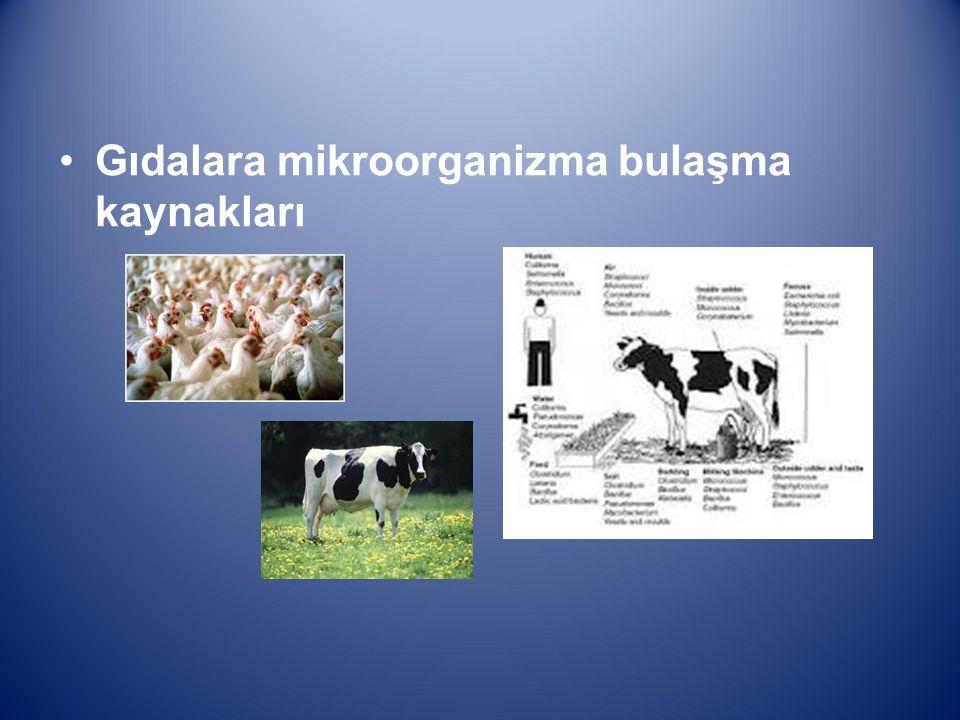 Gıdalara mikroorganizma bulaşma kaynakları