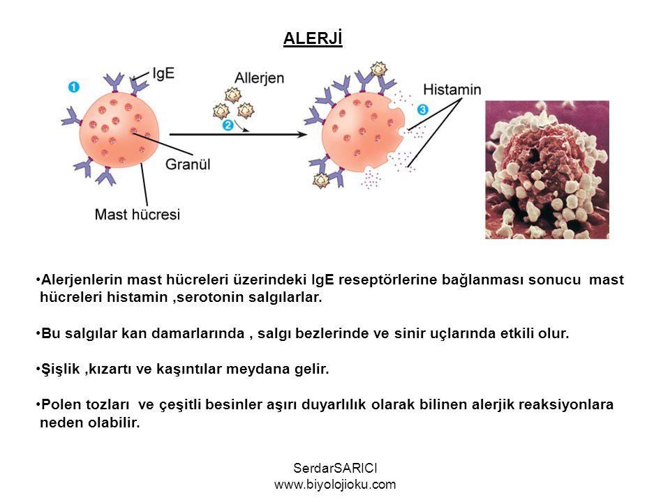 ALERJİ Alerjenlerin mast hücreleri üzerindeki IgE reseptörlerine bağlanması sonucu mast hücreleri histamin,serotonin salgılarlar.