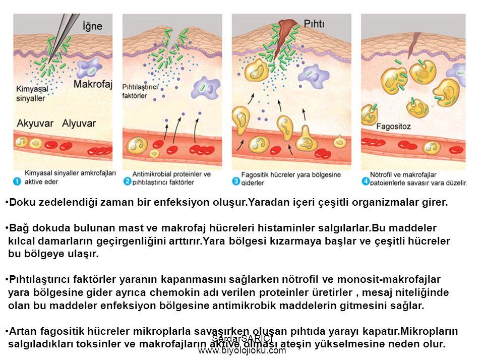 Doku zedelendiği zaman bir enfeksiyon oluşur.Yaradan içeri çeşitli organizmalar girer.