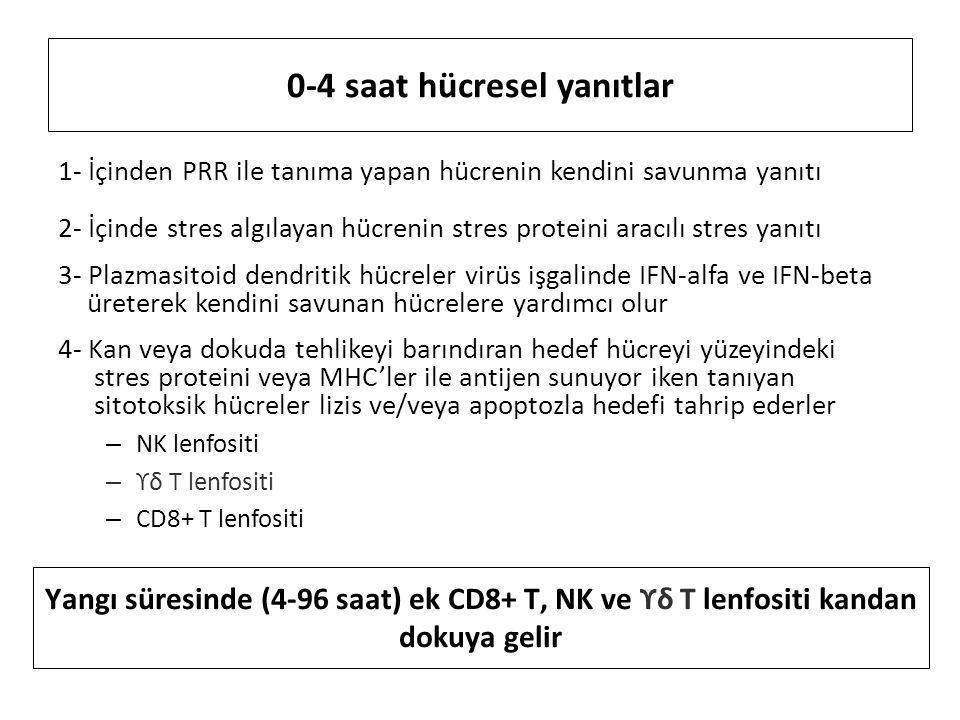 0-4 saat hücresel yanıtlar 1- İçinden PRR ile tanıma yapan hücrenin kendini savunma yanıtı 2- İçinde stres algılayan hücrenin stres proteini aracılı stres yanıtı 3- Plazmasitoid dendritik hücreler virüs işgalinde IFN-alfa ve IFN-beta üreterek kendini savunan hücrelere yardımcı olur 4- Kan veya dokuda tehlikeyi barındıran hedef hücreyi yüzeyindeki stres proteini veya MHC'ler ile antijen sunuyor iken tanıyan sitotoksik hücreler lizis ve/veya apoptozla hedefi tahrip ederler – NK lenfositi – ϒδ T lenfositi – CD8+ T lenfositi Yangı süresinde (4-96 saat) ek CD8+ T, NK ve ϒδ T lenfositi kandan dokuya gelir