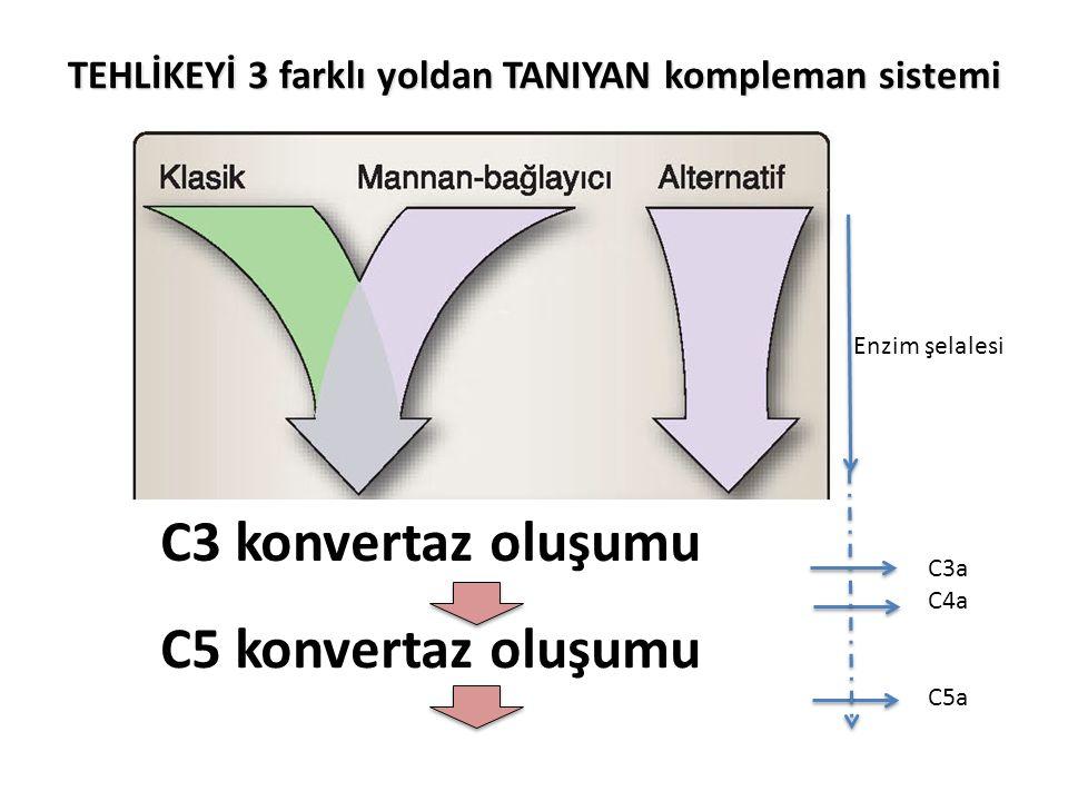 TEHLİKEYİ 3 farklı yoldan TANIYAN kompleman sistemi C3 konvertaz oluşumu C5 konvertaz oluşumu C3a C4a C5a Enzim şelalesi