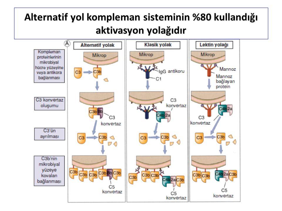 B Alternatif yol kompleman sisteminin %80 kullandığı aktivasyon yolağıdır
