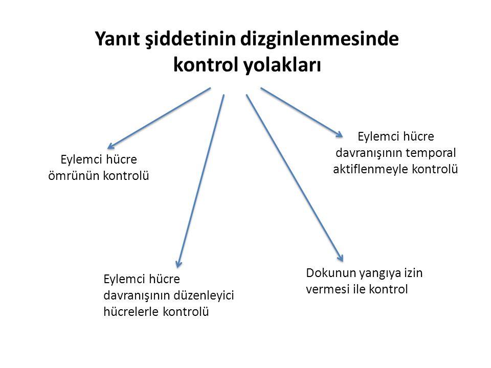 Yanıt şiddetinin dizginlenmesinde kontrol yolakları Dokunun yangıya izin vermesi ile kontrol Eylemci hücre davranışının düzenleyici hücrelerle kontrolü Eylemci hücre ömrünün kontrolü Eylemci hücre davranışının temporal aktiflenmeyle kontrolü
